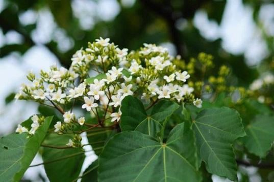 Những loài hoa đẹp